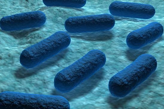 e coli water testing